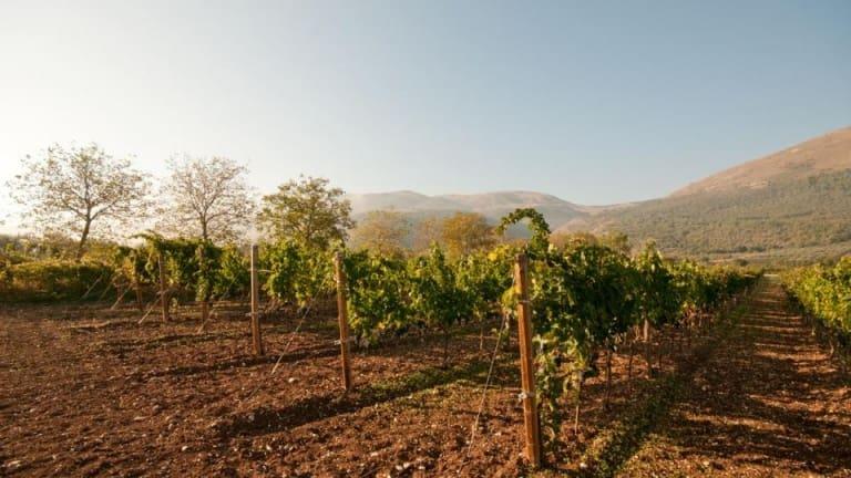 Vino per Agnello cacio e ova: Montepulciano d'Abruzzo Praesidium. Biologico