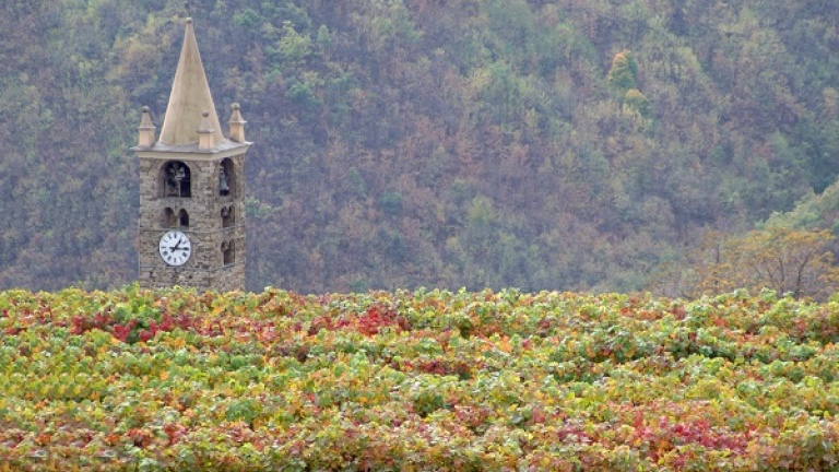 Vigneti Riviera di Ponente Ligure, Pigato, Imperia, vini bianchi liguri